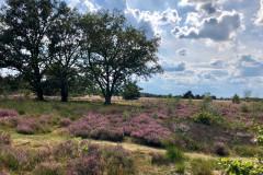 Heide bij Wolfheze op 2 km